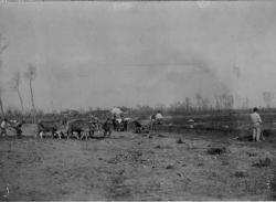 Cascina Carlo: carro con buoi e vagoncini al lavoro: esperimenti di mescola dei terreni per migliorarne la resa [2]