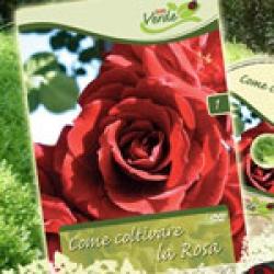 Come coltivare la rosa