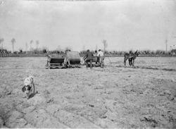 Cascina Carlo: vagoncini al lavoro: esperimenti di mescola dei terreni per migliorarne la resa [1]