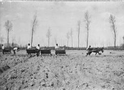 Cascina Carlo: mulo che trascina i vagoncini, con 5 uomini al lavoro