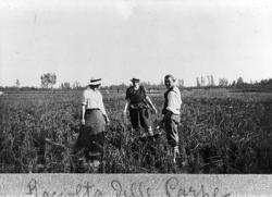 Cascina Carlo: raccolta delle carpe nella risaia